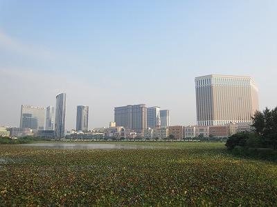 タイパハウスミュージアムからの眺め